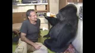 Робин Уильямс и его горилла Коко