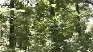 Скачать Cicada Buzz