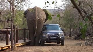 Dzikie Zwierzęta Atakują NAJLEPSZE FILMY 2020 VOL 146  wpadki Kompilacja  ŚMIESZNE FILMIKI CCby
