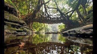 Megalaya Amazing Living Root Bridge