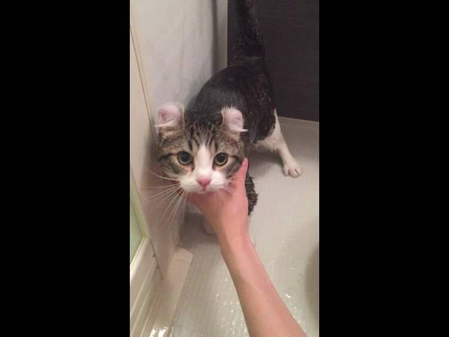 American curl boy taking a shower