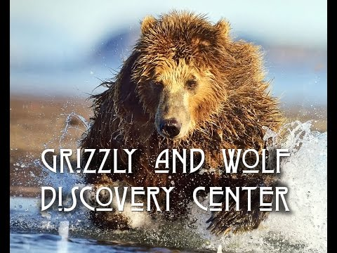 Grizzly and Wolf Discovery Center, West Yellowstone, Montana