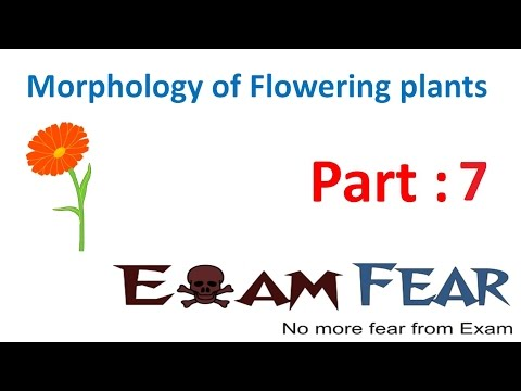 Biology Morphology of Flowering Plants part 7 (Specialized functions of Root) CBSE class 11 XI