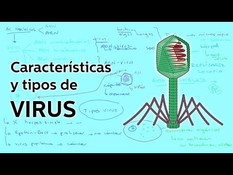 diferentes formas de un virus y sus partes
