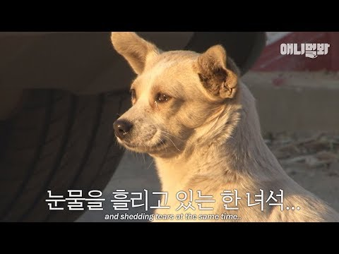 Dog in the video saying: I miss my mother these days...