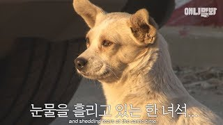 """Dog in the video saying: """"I miss my mother these days..."""""""