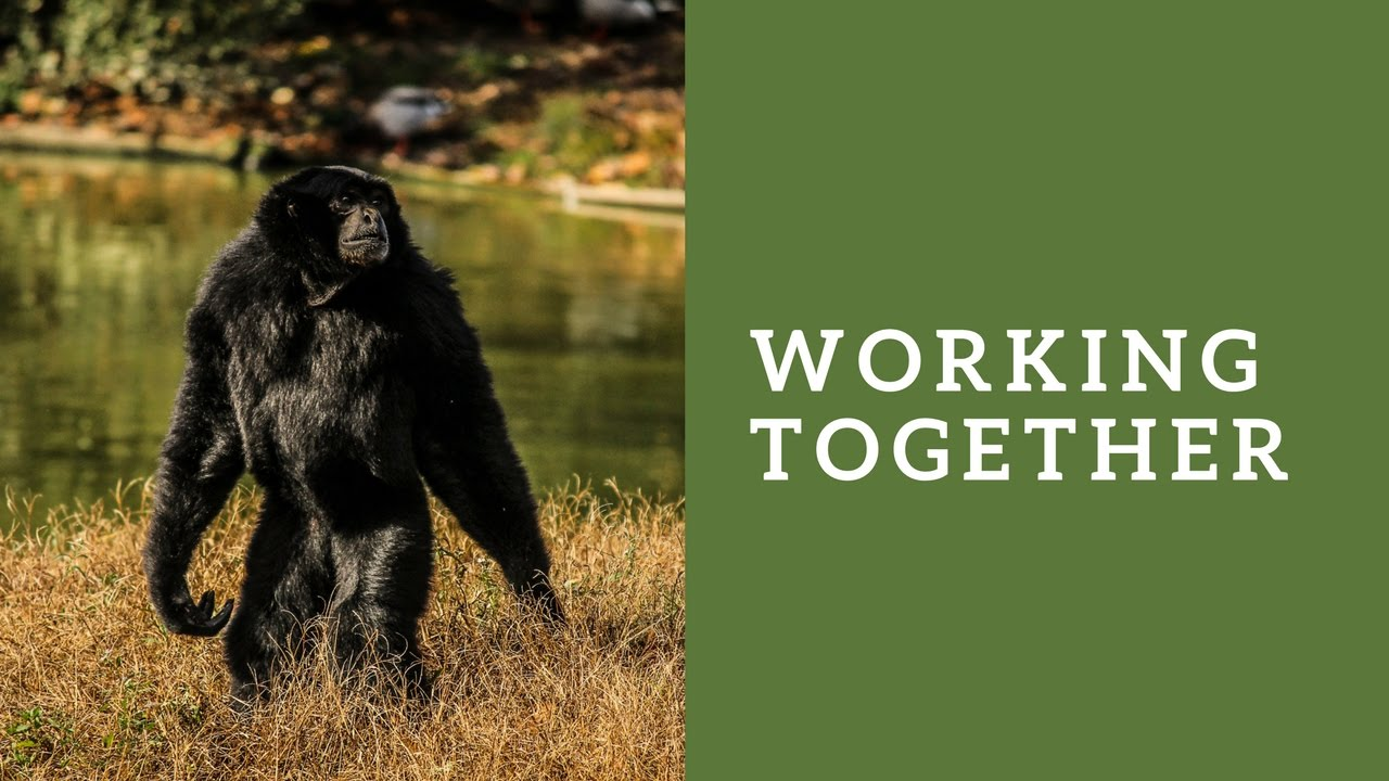 Catskill Conversation: Working Together: A Multipronged Strategy for Animal  Rights