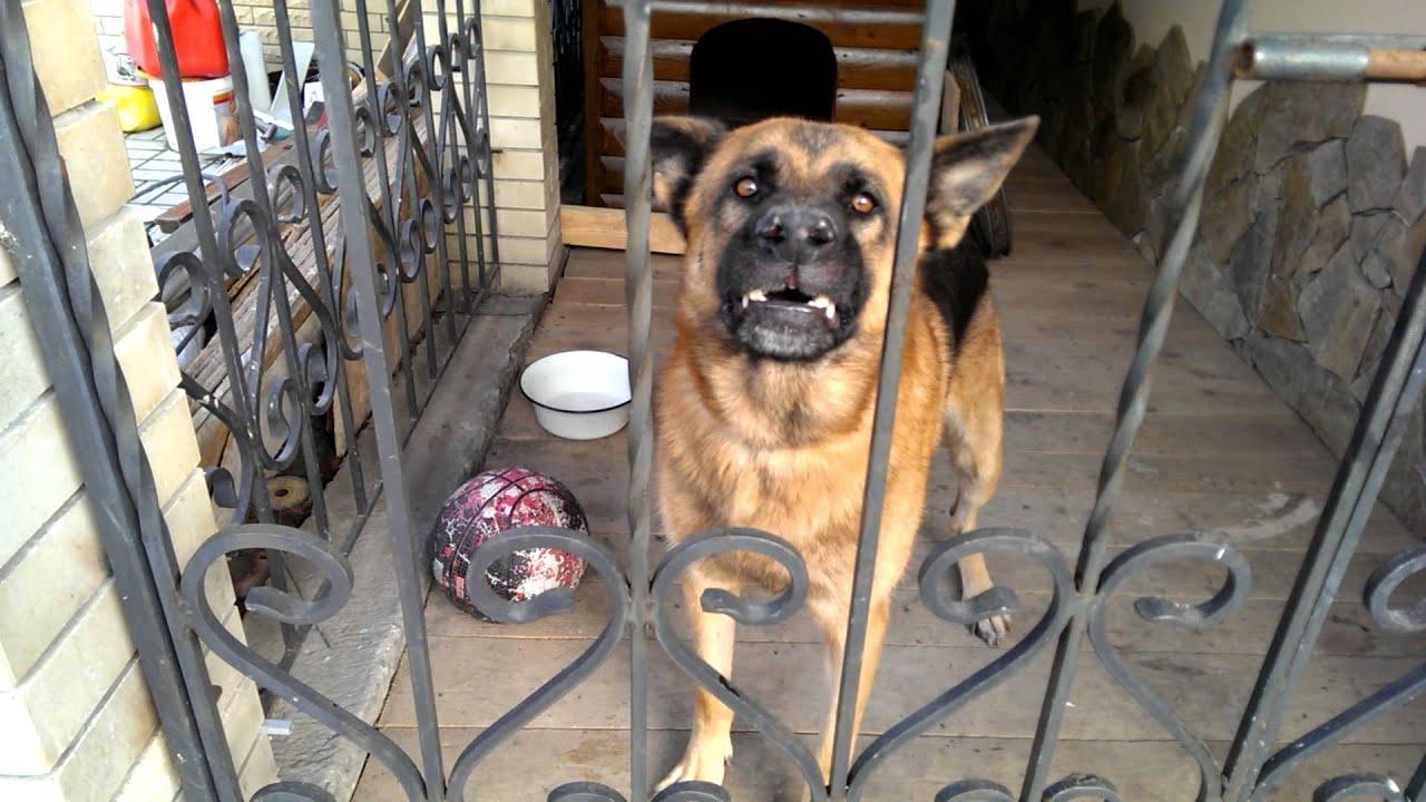 Ну очень злой пес 1)) -Well, very angry dog