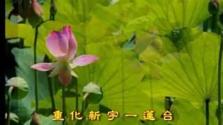 蓮花頌 - 白雪