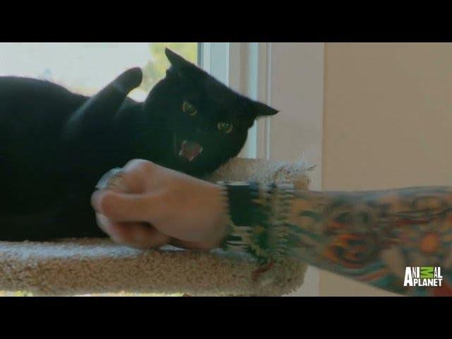 Littlez' Follow-Up | My Cat From Hell