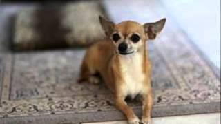 Радители не розрешают собаку? Покажи им это видео!