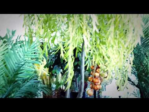 Листопадные растения, деревья и кустарники для сада фото