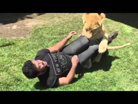 Beautiful moment lioness is reunited with man who raised her as a cub