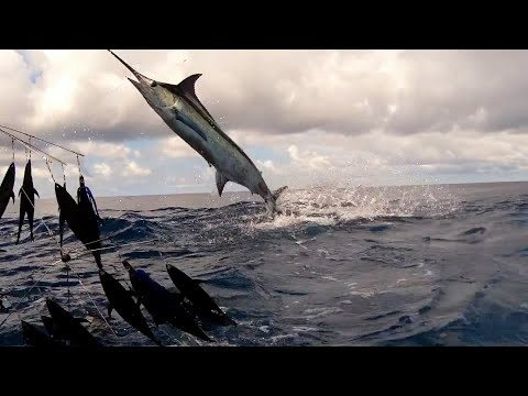 Blue Marlin, Sailfish, Yellowfin Tuna In Costa Rica | Two Conchs Sportfishing TV Season 1/Ep10
