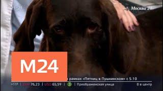 """""""Московский патруль"""": мошенники выдали дворняжку за питбуля - Москва 24"""