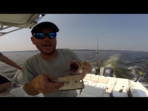 Trolling For Spanish Mackerel Out Of Chesapeake Beach Sept 2015