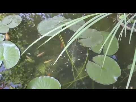 Аэратор для садового водоема своими руками