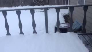 Snowstorm in Livonia Michigan   11.13.14
