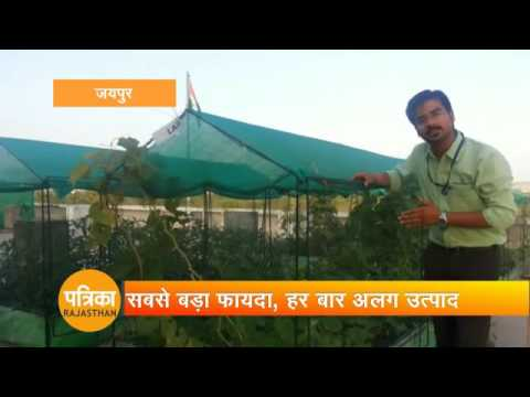 Green Vegetables Farming in Jaipur