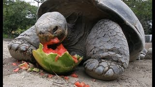 WaterANIMALons - Animals Eating Watermelon With Great Pleasure