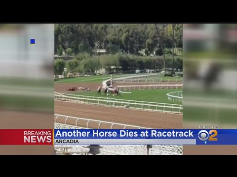 Another Horse Euthanized Following Accident At Santa Anita Race Track