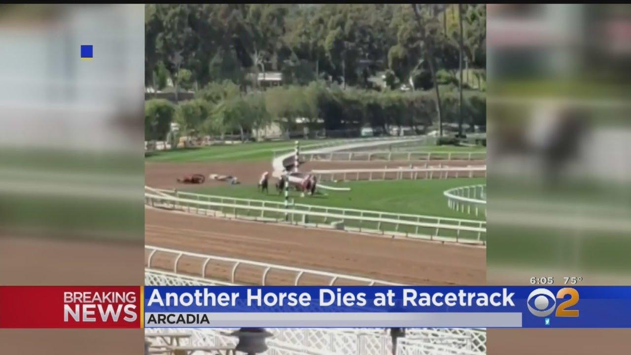 Santa Anita, Kentucky horse fatalities prompt osteo drug ban