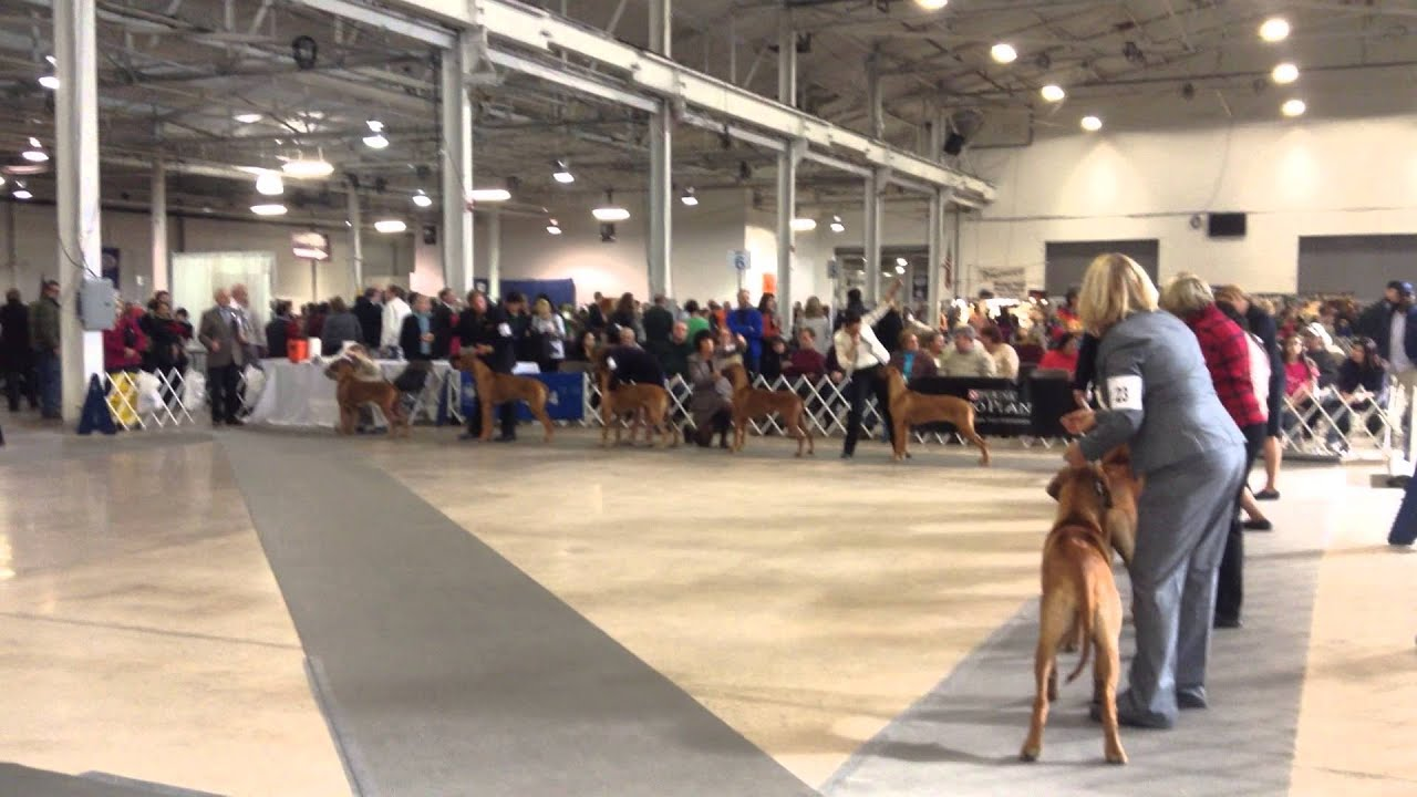 Kennel Club Of Philadelphia  Dog Show
