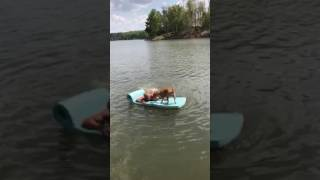 Roo swimming