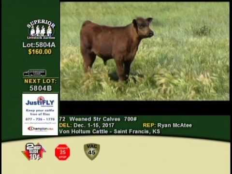 Superior Livestock Auction's: Week in the Rockies - Lot 5804