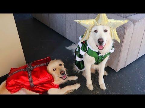 CHRISTMAS / HOLIDAY EPISODE! (Super Cooper Sunday #81)