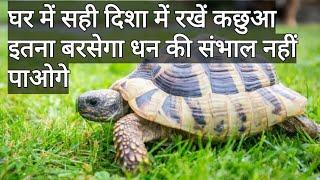 vastu shastra tips | घर में सही दिशा में रखें कछुआ इतना बरसेगा धन की संभाल नहीं पाओगे