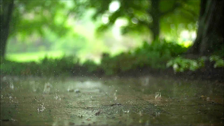 Permanent Link to Rain Sounds   8 HOURS High Quality Sounds, Thunder, Sleeping, Studying, Meditation