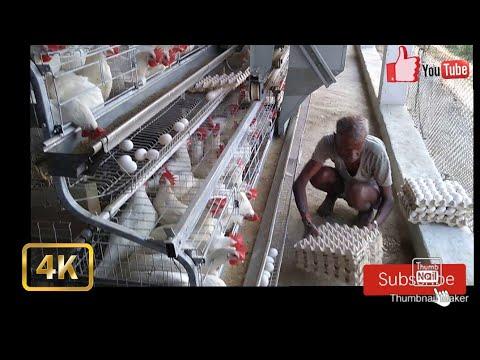 Bhojpur Layer Farm