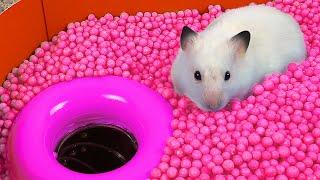 Hamster Ball pool Maze