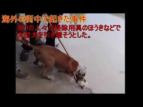 しつけされてない大型犬が小型犬を襲う