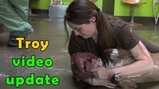 Troy - video update (Make sure to check out the video of his rescue - link below).