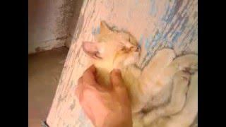 Коты после валерьянки!