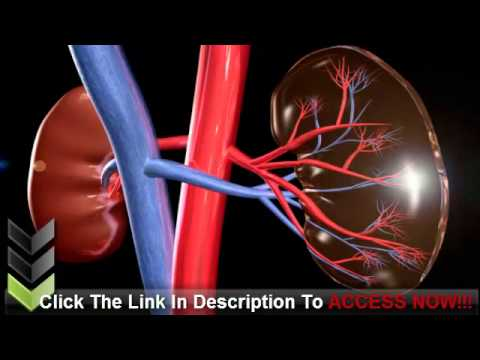 What Is Kidney Disease And What Can Be Done About It?