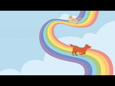 La leyenda del arcoíris: ¿Por qué cuando un animal muere decimos que cruza el arcoíris?