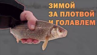 Зимняя рыбалка на плотву и голавля. Ловля на мормышку и жерлицы