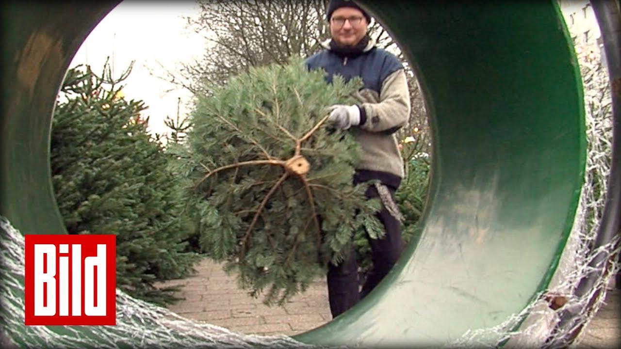 Weihnachtsbaum kaufen - diese 5 Tipps müssen sie beachten - YouTube