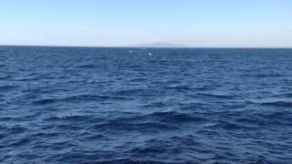 Blue Whale - Pacific Ocean - Long Beach California (2)