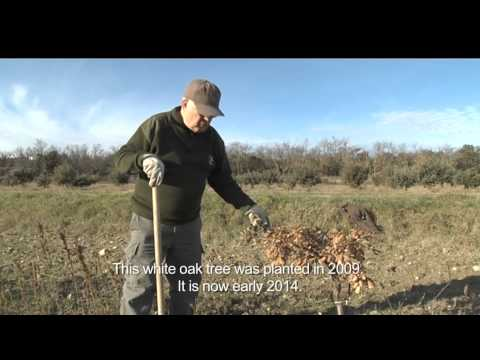 Truffle Farm-The Domaine of Cordis -