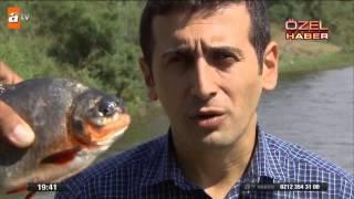 Gölette canavar balık paniği - atv Ana Haber Video