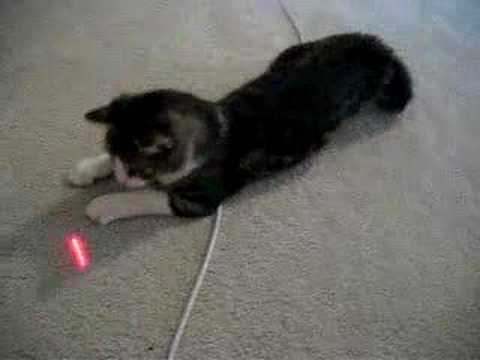 Crazy Cat And Laser Light Design