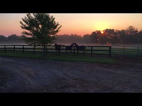 TONEDOUT (middle) playing with a buddy in the paddock at December Farm 9/22/2017