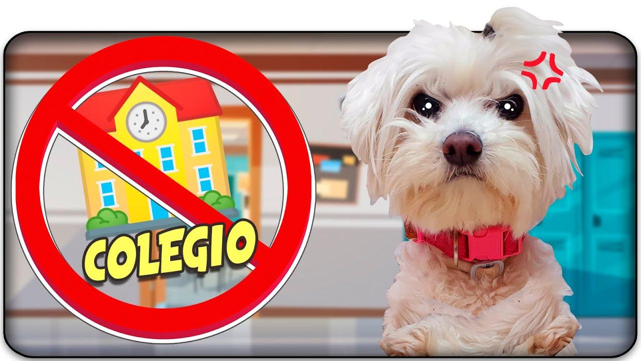Mi PERRO ODIA el COLEGIO! Llegan las VACACIONES! 🏫🐶 Anima Dogs