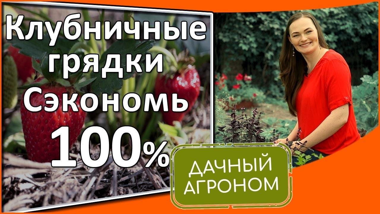 Хотите много крупной клубники? Новые урожайные грядки бесплатно!
