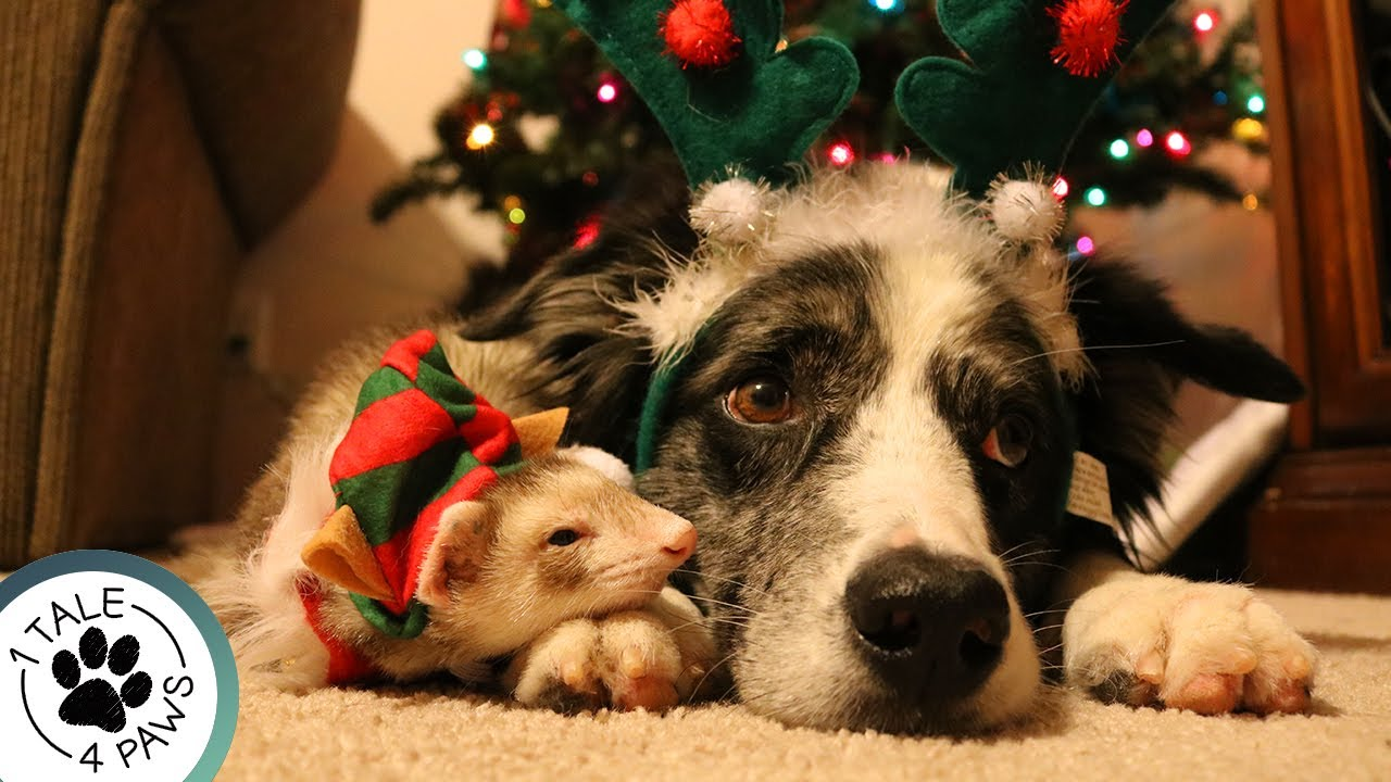 CHRISTMAS GIFT IDEAS FOR PETS AND PET LOVERS   Epic Collab! - YouTube