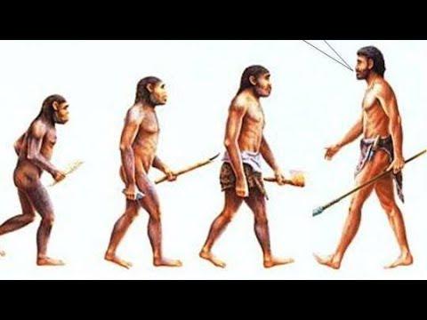 Evolution and Creation